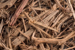 Landscaping Ground Covers: Almond Wood Mulch